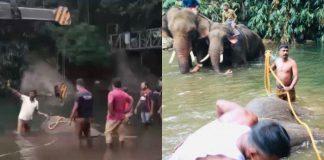 Gajah Mati di India, Pelaku di Kecam